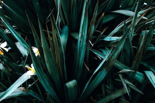คลังภาพถ่ายฟรี ของ การเจริญเติบโต, ความสด, ต้นไม้