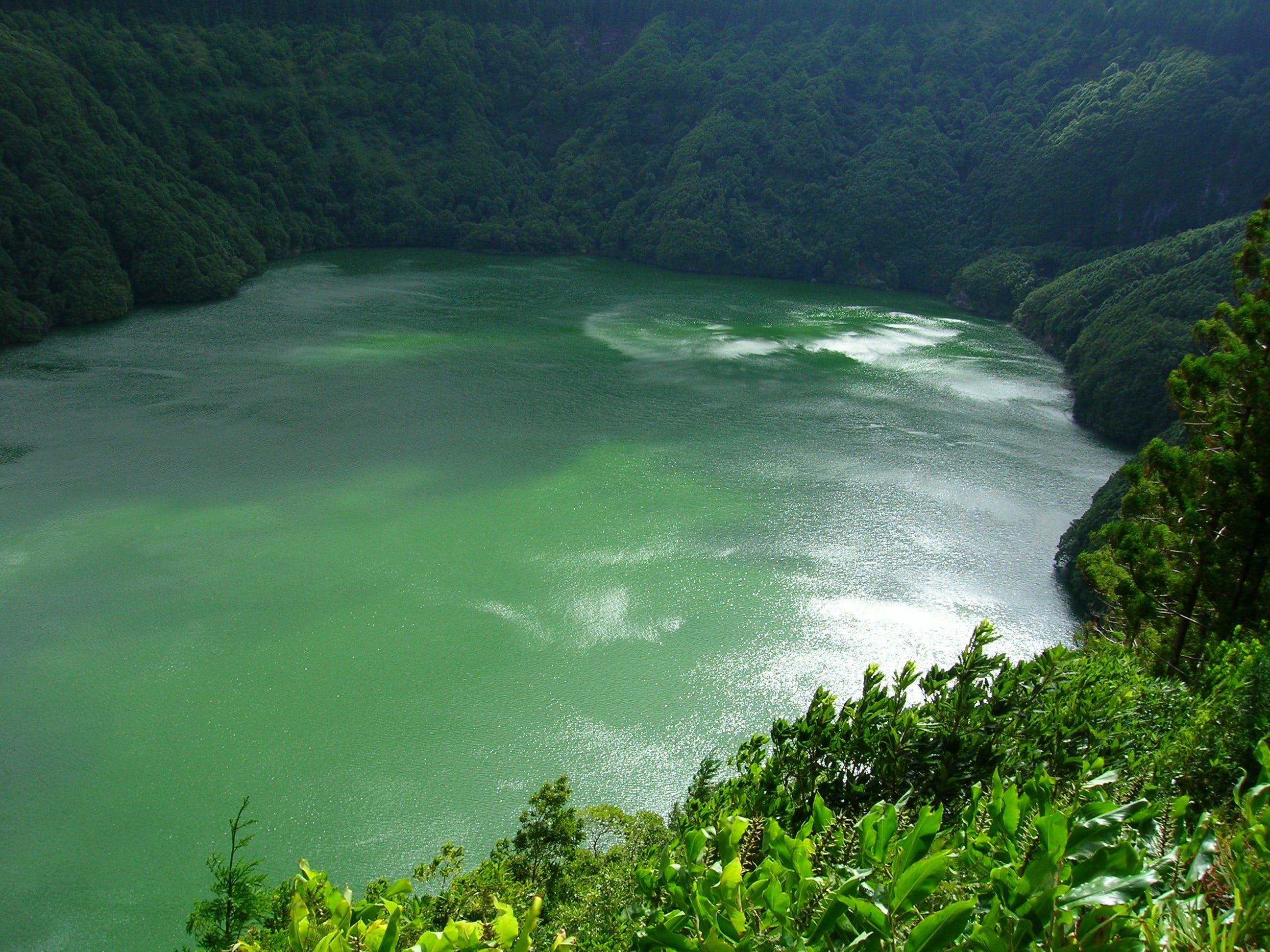 lake, nature, water