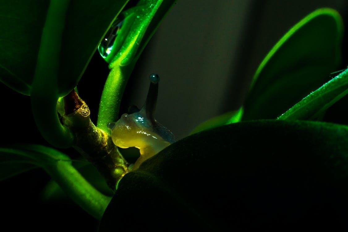 Green Snail on Leaf