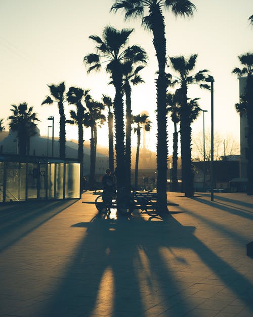 Silhouette of person with bicycle near palms on area