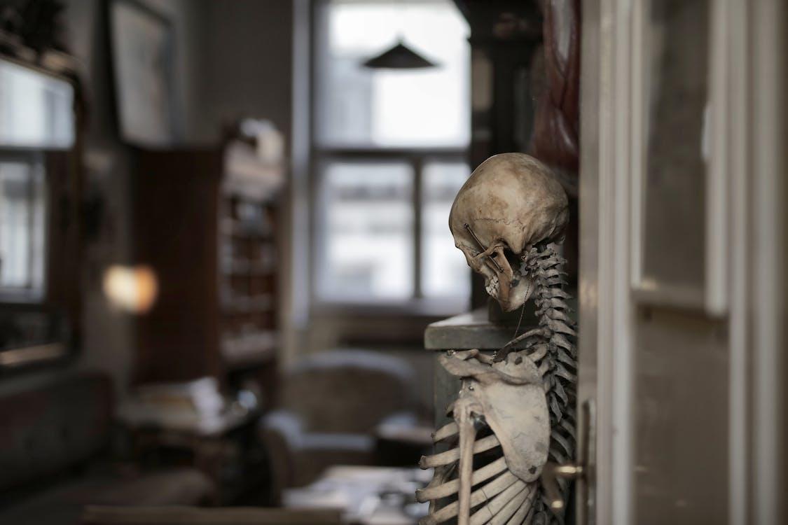 Old human skeleton in museum room
