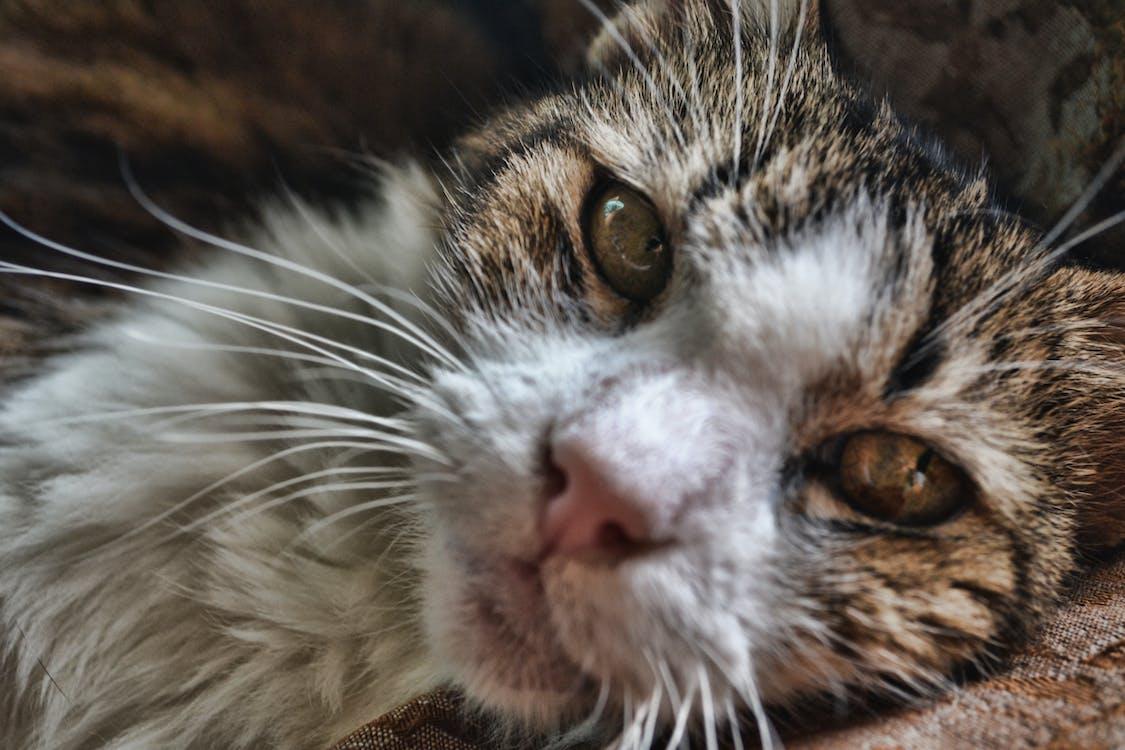 Free stock photo of cat, gata, kitten