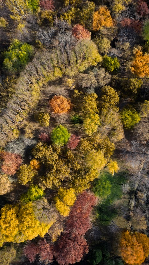 Aerial view of lush autumn forest with multicolored deciduous and leafless trees in sunlight