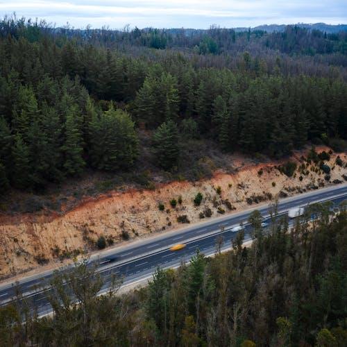 Roadway among green coniferous trees