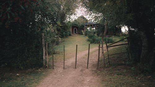 Pathway leading to small house hidden in lush vegetation behind wooden fence in daylight