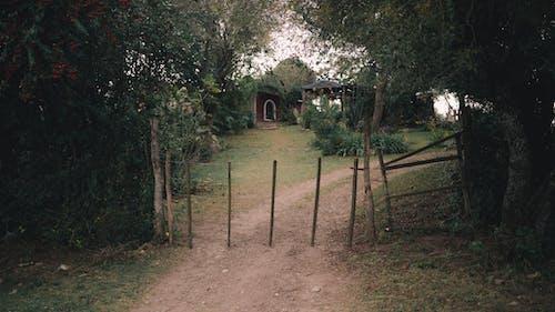 Základová fotografie zdarma na téma budova, bujný, cesta, chata