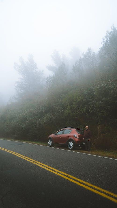 Ingyenes stockfotó aszfalt, autó, eső, fa témában