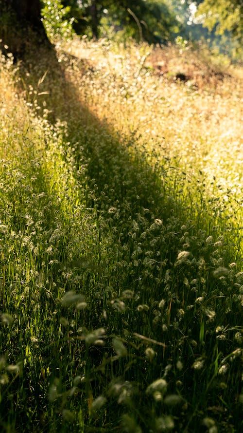 Ingyenes stockfotó fényes, fű, hajnal, kaszáló témában