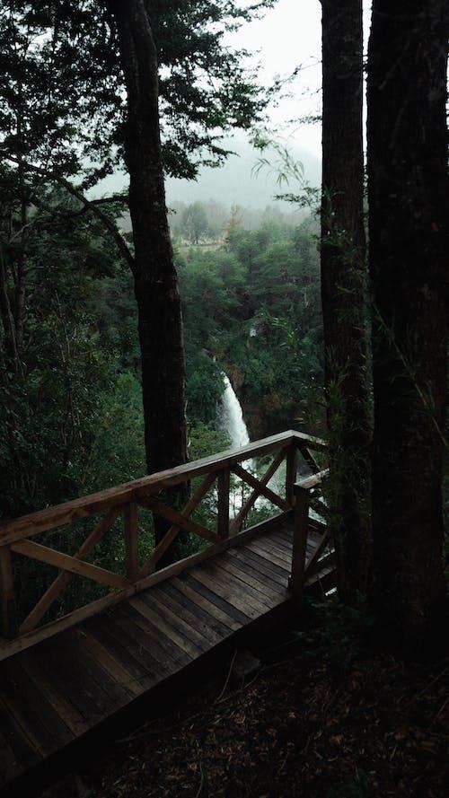 Ingyenes stockfotó esőerdő, fa, festői, folyó témában