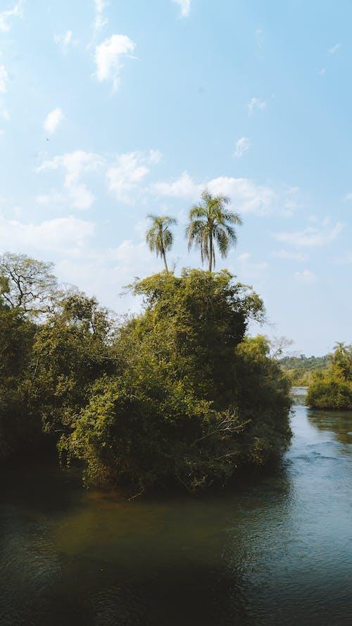 Ingyenes stockfotó buja, esőerdő, fa, folyó témában