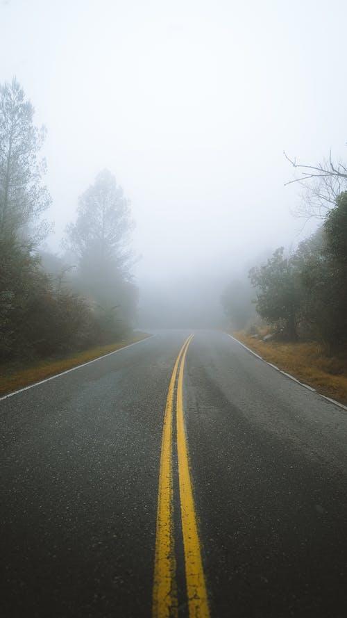 Asphalt road between trees on foggy day