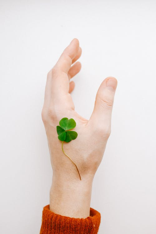 Clover on Persons Hand