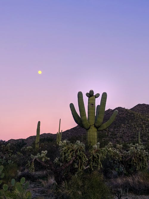 Cactus Plant On Hill during Sunset