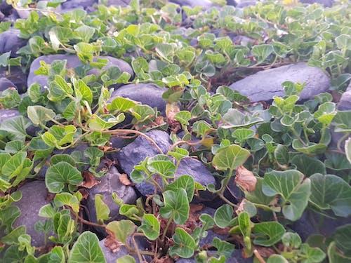 小, 植被, 樹葉, 海灘 的 免费素材图片