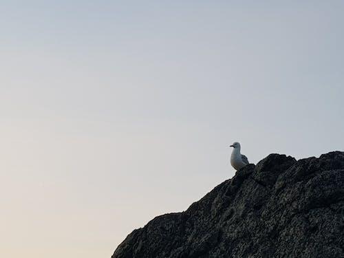 คลังภาพถ่ายฟรี ของ นกนางนวล, เช้าตรู่
