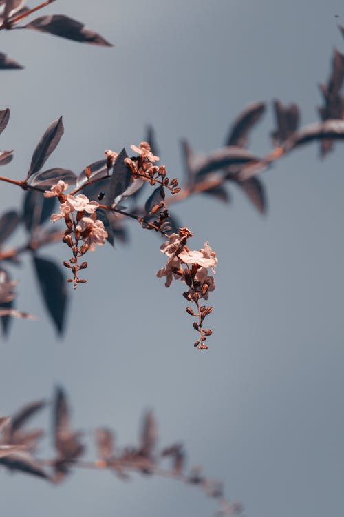Twig with blooming flowers on gray background