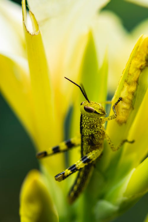 Yellow And Black Grasshopper On Yellow Flower