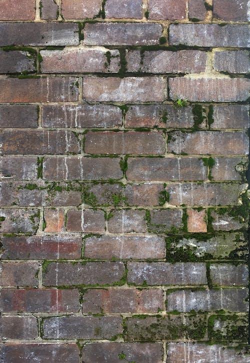 Gratis arkivbilde med grønn mos, mose, mur av mur, murstein