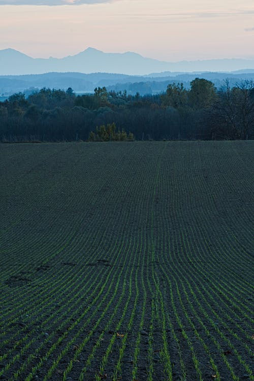 Gratis stockfoto met akkerland, boerderij, bouwland, gewas