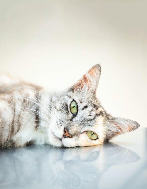 Tabby Cat Lying On White Textile