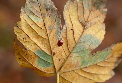 Red Ladybug On Leaf