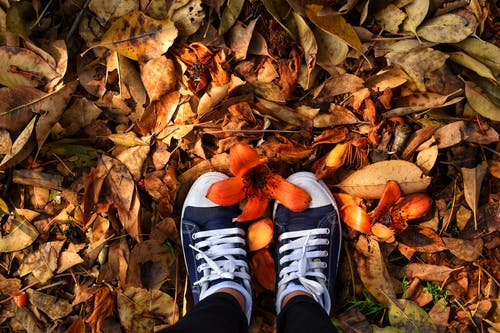 Person Wearing Sneakers Standing On Dry Leaves