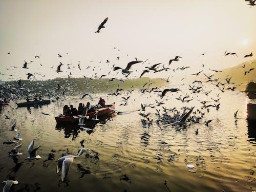 カモメ, 人, 夜明け, 川の無料の写真素材