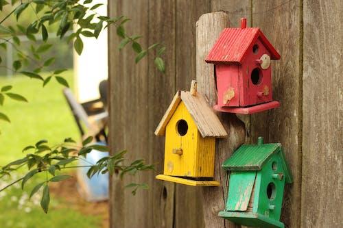 フェンス, 小鳥小屋, 巣箱の無料の写真素材