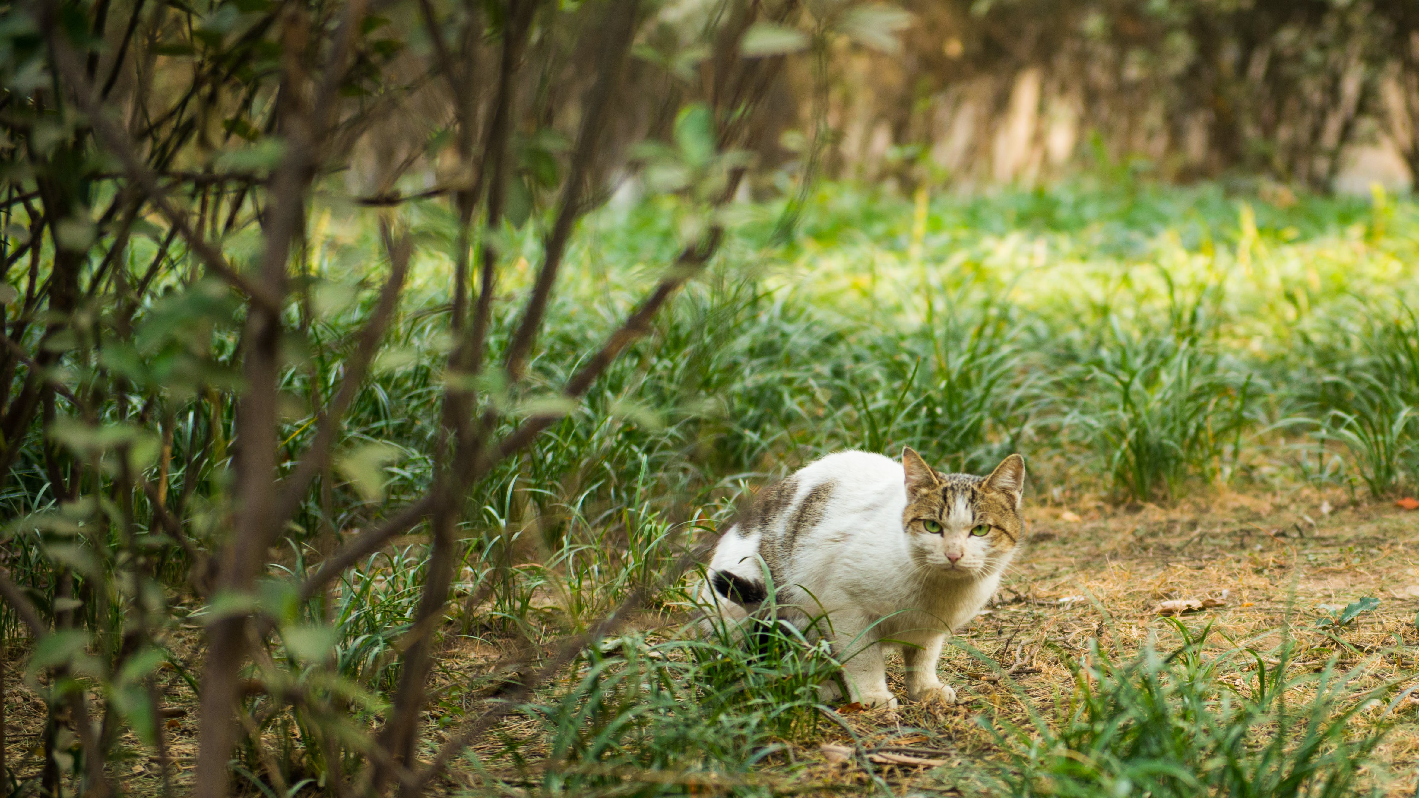 Free stock photo of angry, cats, green