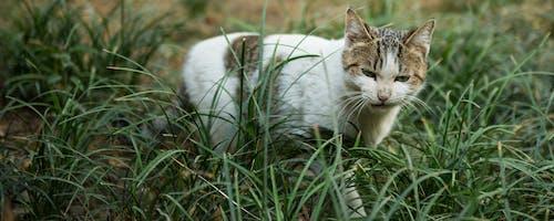 Fotobanka sbezplatnými fotkami na tému mačka, nahnevaný