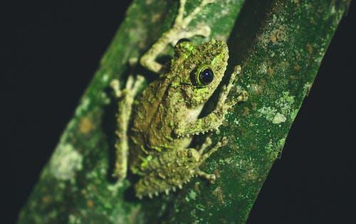 Green Frog On Green Gross
