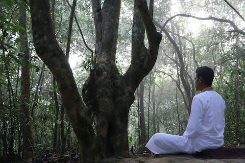 Immagine gratuita di bhawana, bianco, buddha