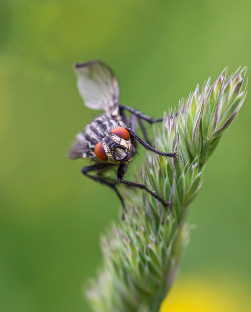 Fly Perché Sur Une Fleur En Gros Plan Photographie