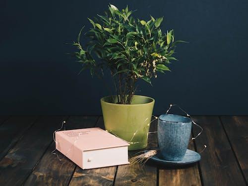 在木桌上的書和杯子