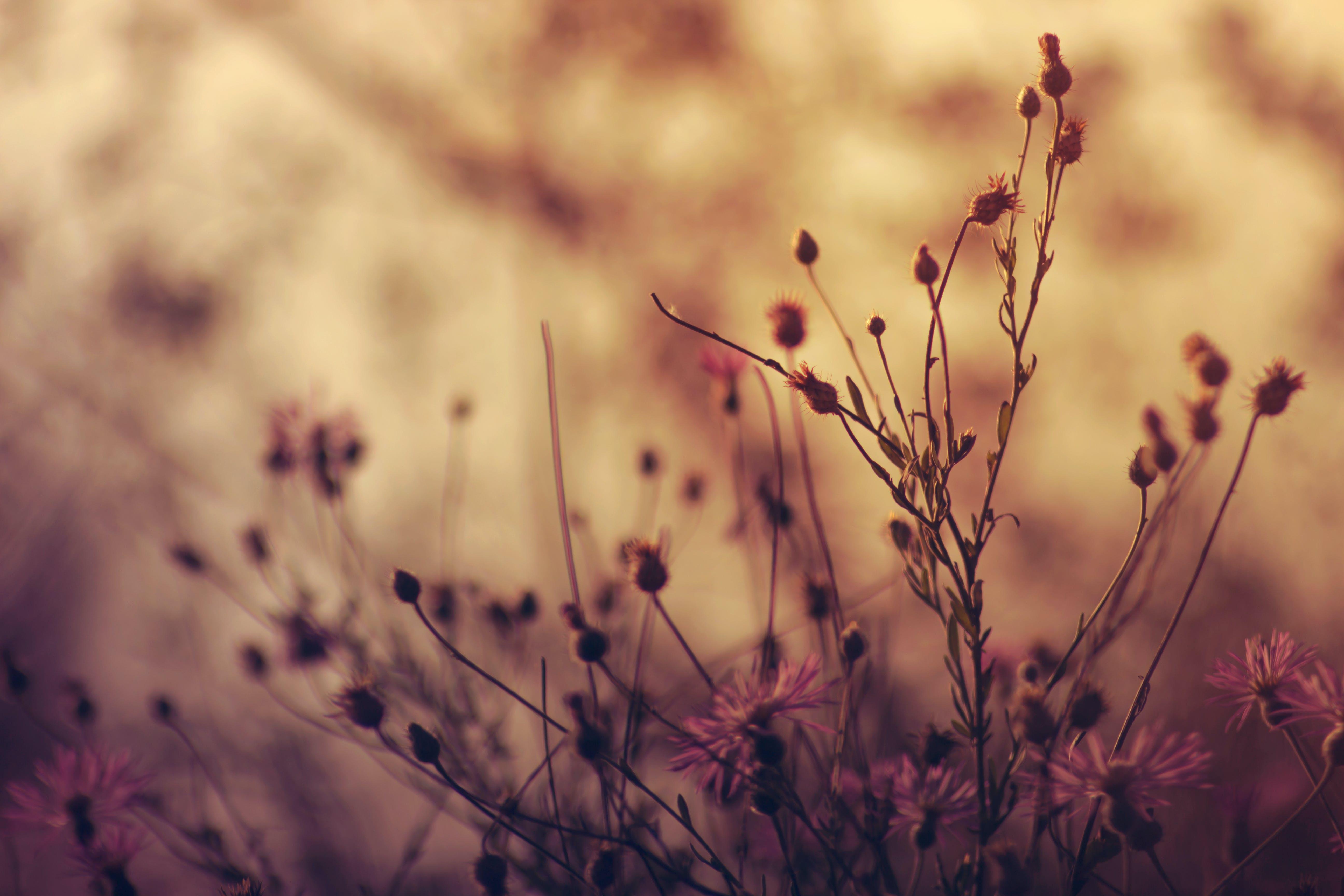 Plants Shallow Focus Photography