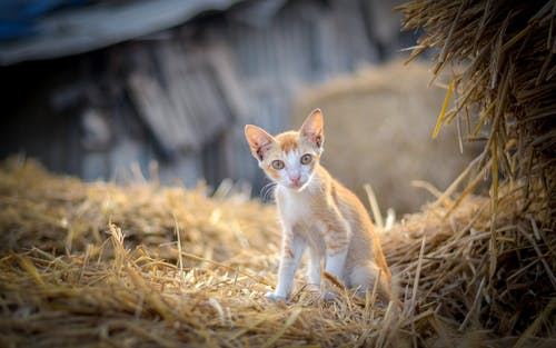 Бесплатное стоковое фото с домашнее животное, домашние кошки, домашняя кошка, животное