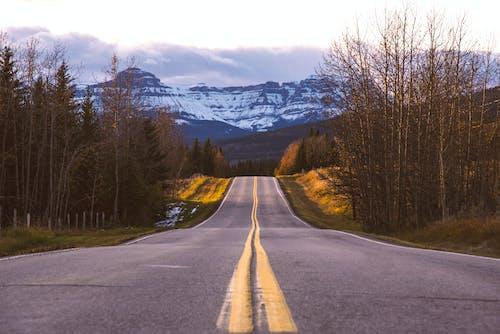 Ilmainen kuvapankkikuva tunnisteilla aamu, ajaa, ajorata, asfaltti