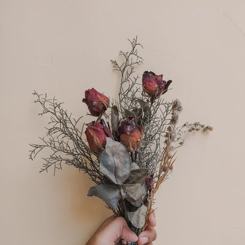 Darmowe zdjęcie z galerii z bukiet, flora, kwiaty, kwitnąć