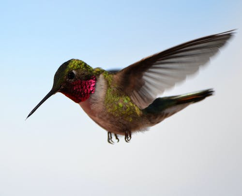 Photo Of A Hummingbird