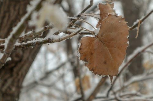 Free stock photo of dried leaf, large leaf, nature