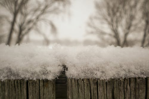 Free stock photo of bottom, snow covered