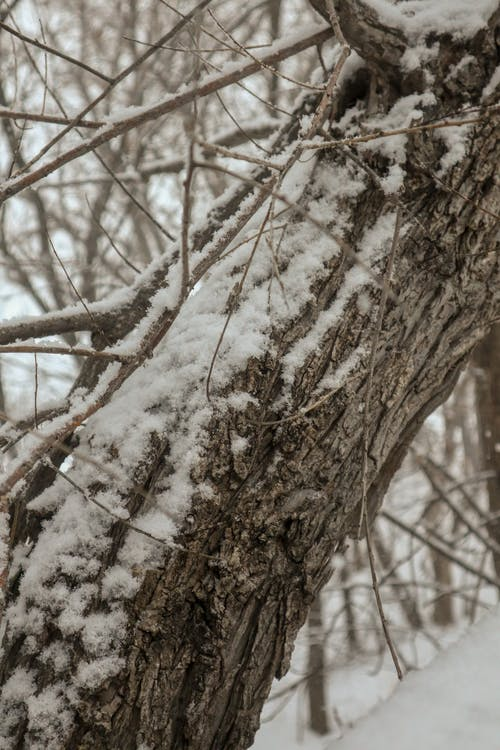 Free stock photo of snow covered, tree trunk, winter