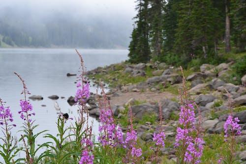 Free stock photo of beautiful landscape, fog, foggy, forest
