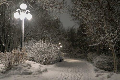 Free stock photo of night, night lights, park
