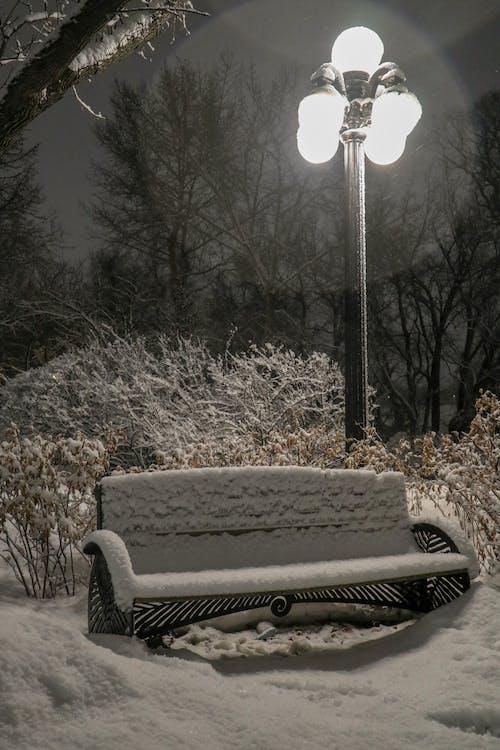 Free stock photo of city park, night, nightlight