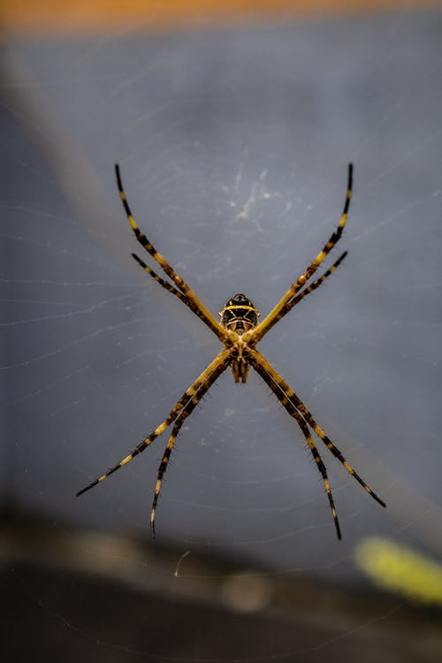 Close-up Shot Of Spider