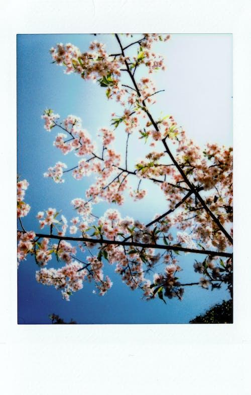 Immagine gratuita di albero, bocciolo, film, film istantaneo