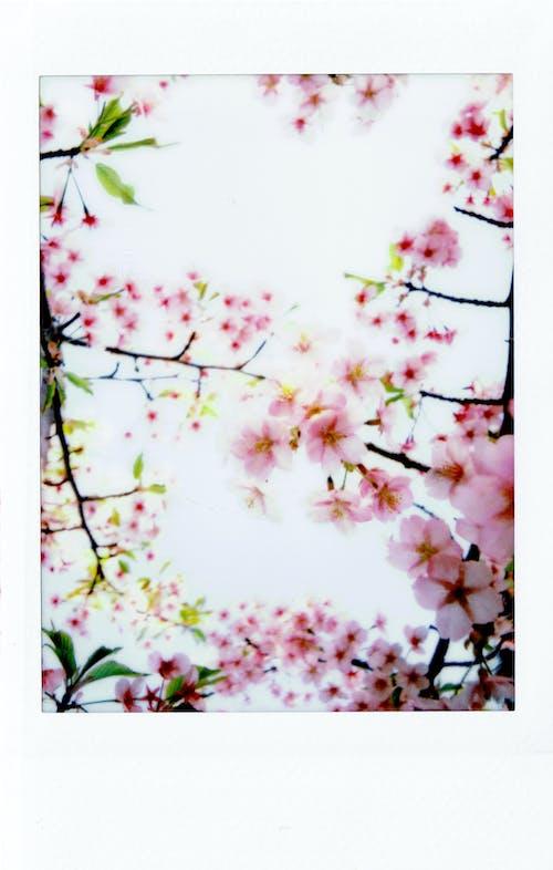 Darmowe zdjęcie z galerii z drzewo, flora, gałąź, instax