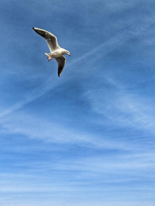 White Bird Flying Under Blue Sky