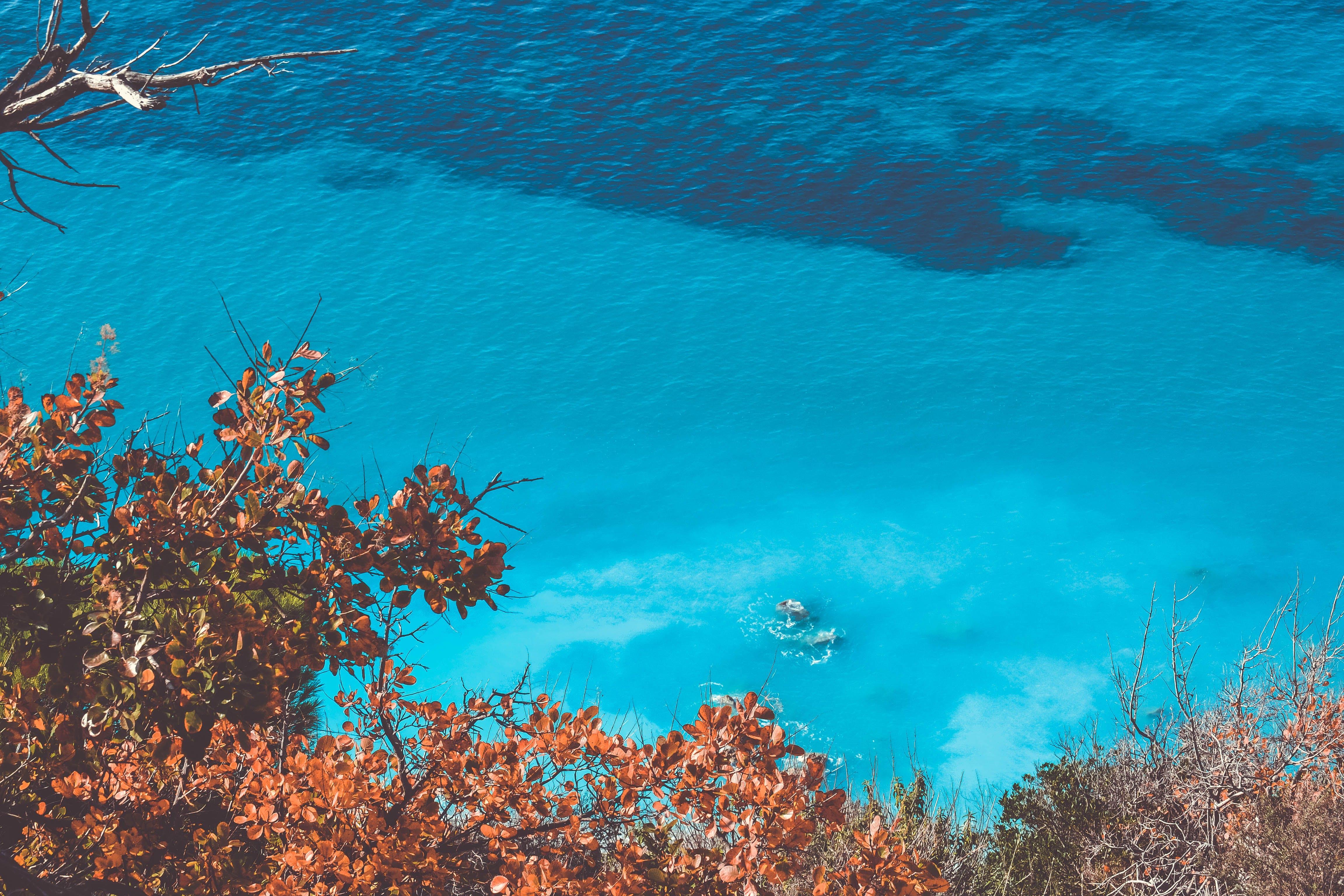 Blue Ocean Under Sunny Sky